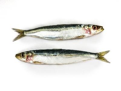 Matériel poissonnerie